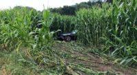 A6 Schüpfen BE - Auto landet nach Unfall im Maisfeld