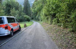 Unfall endet für Hund tödlich - Lenkerin gesucht