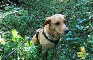 Churwalden GR - Polizeihund findet vermisste Parkinson-Patientin