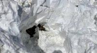 Seealpsee AI - Frau 30 Minuten unter Lawine begraben