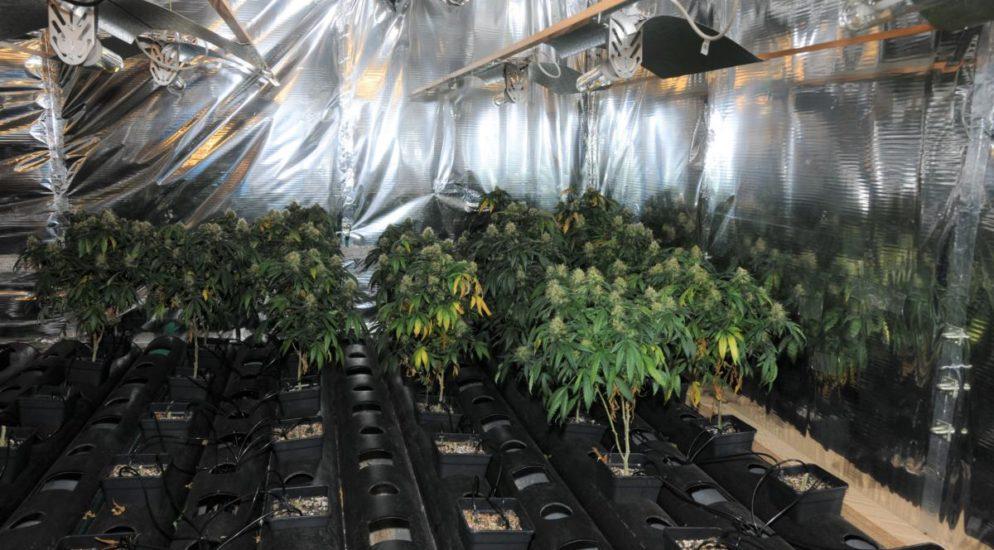 Hanf-Indooranlage in Gurtnellen sichergestellt