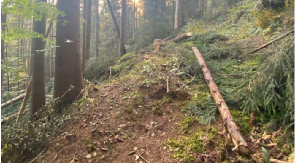 Schwerer Forstunfall in Oberägeri ZG - Jugendlicher lebensbedrohlich verletzt