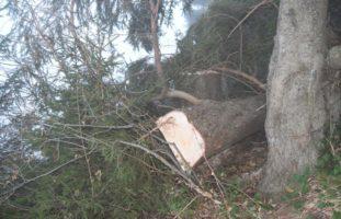 Gais: 36-Jähriger beim Holzen verunfallt