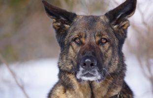 Chur GR - Polizeihund fasst Jugendlichen