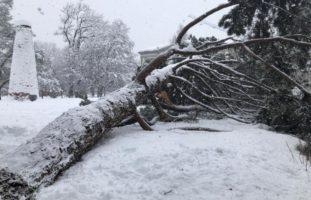 Stadtpark in St.Gallen abgesperrt