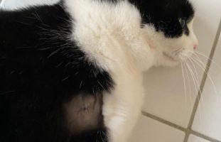 Tierquäler schiesst in Winterthur auf eine Katze