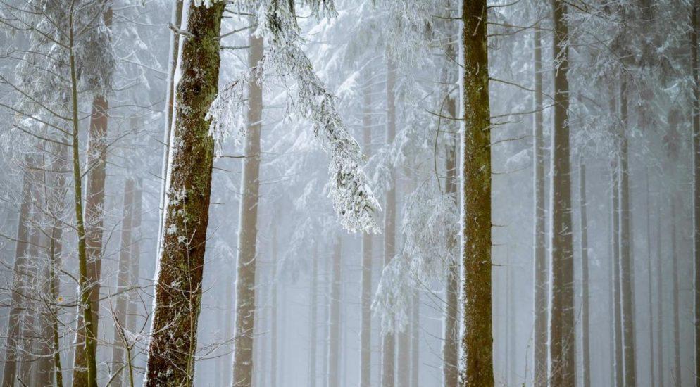 Vorsicht in Waldgebieten - 150 Meldungen in Frauenfeld TG