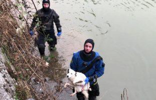 Seepolizei Freiburg rettet Hund aus der Saane
