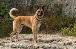 Polizeihund findet vermisste Person in Heiden AR
