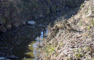 Rothenburg LU: Gülle im Gewässer fordert 90 % des Fischbestandes