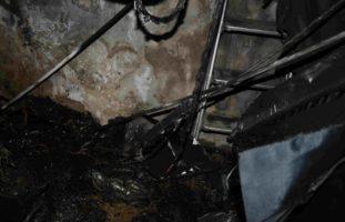 Seengen AG: Hanf-Indooranlage bei Brand entdeckt