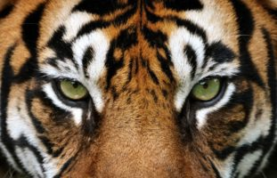Urteil zum Tiger-Angriff im Zürich Zoo von 2020