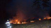 Gänsbrunnen: Waldbrand auf der Krete - Fläche von 50 Aren beschädigt