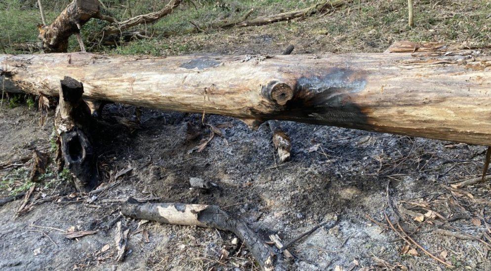 Gränichen AG: Asche verursacht Waldbrand