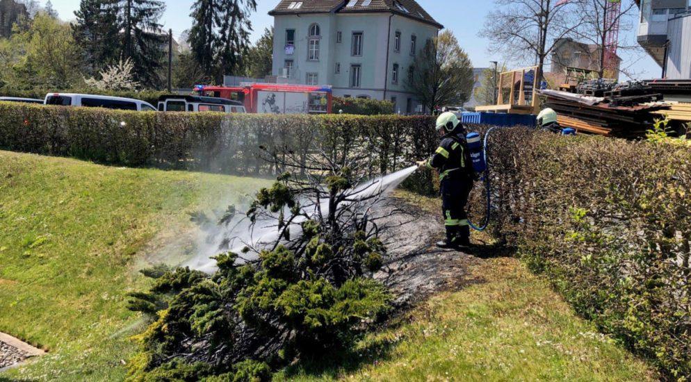 Bischofszell TG - Sträucher in Brand geraten
