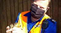 Solothurn: Polizei rettet 8 Tiere