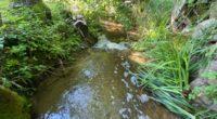 Moosbach in Baar ZG durch Jauche verschmutzt