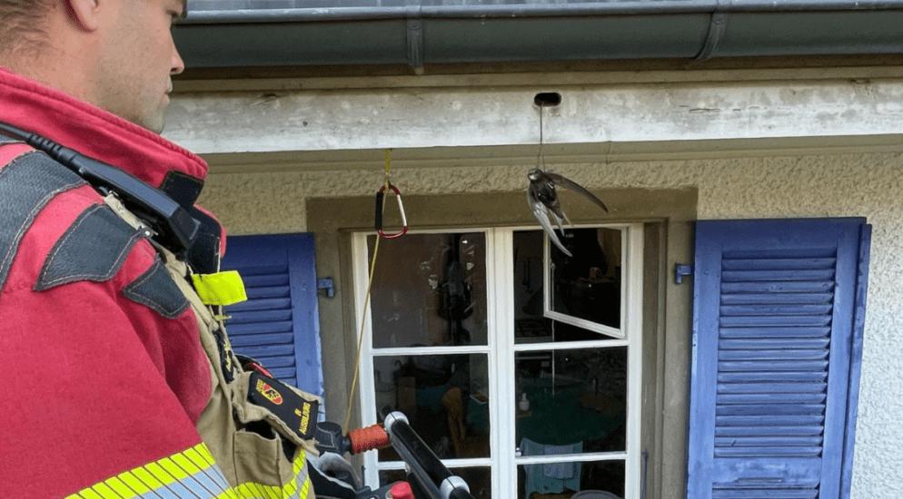 Murifeld BE - Vogel unverletzt mittels Drehleiter aus Schnur befreit