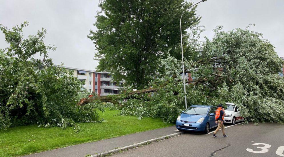 Baum stürzt auf 5 parkierte Autos und Spielplatz in Zug