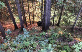 Stein SG - 76-Jähriger kollidiert mit Baum und stirbt